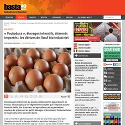 « Pouloducs », élevages intensifs, aliments importés : les dérives de l'œuf bio industriel