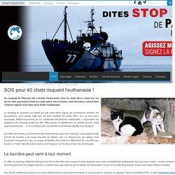 SOS pour 40 chats risquant l'euthanasie !