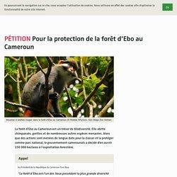 Pour la protection de la forêt d'Ebo au Cameroun