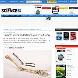 Un bras prénéandertalien qui en dit long