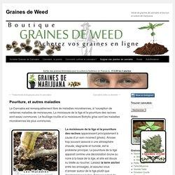 Pouriture, et autres maladies – Graines de Weed