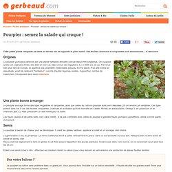 Pourpier : semis, culture et récolte