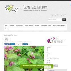 LAMIER - lamier pourpre - ortie rouge - Semer, planter, diviser, entretenir...
