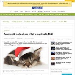 Pourquoi il ne faut pas offrir un animal à Noël