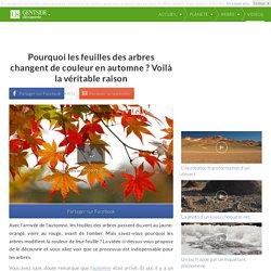 Pourquoi les feuilles des arbres changent de couleur en automne ? Voilà la véritable raison