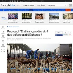 Pourquoi l'Etat français détruit-il des défenses d'éléphants ?