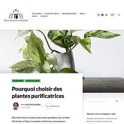 Pourquoi choisir des plantes purificatrices