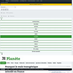 LE MONDE 15/04/16 Pourquoi le maïs transgénique MON810 de Monsanto restera interdit en France