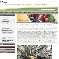 OMAFRA - 2015 - Pourriture du collet causée par Phytophthora dans les fraises