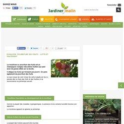 Moniliose ou pourriture des fruits : conseils et traitement