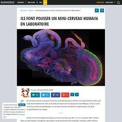 Ils font pousser un mini-cerveau humain en laboratoire