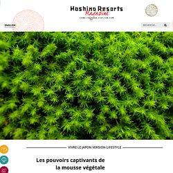 Les pouvoirs captivants de la mousse végétale japonaise - Hoshino Resorts Magazine