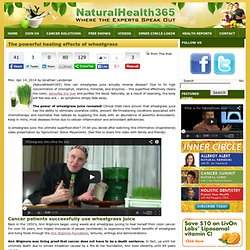 The powerful healing effects of wheatgrass