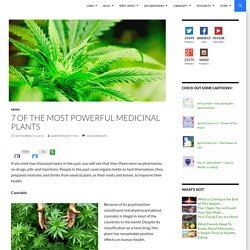 7 Of The Most Powerful Medicinal Plants
