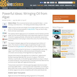 Powerful Ideas: Wringing Oil from Algae