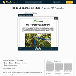 Top 10 Spring tree care tips