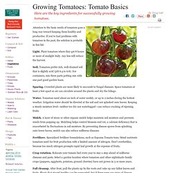 A Best-Practices Guide to Growing Tomatoes: Tomato Basics