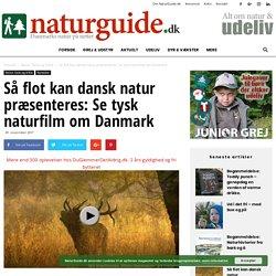 Så flot kan dansk natur præsenteres: Se tysk naturfilm om Danmark - NaturGuide.dk - Danmarks natur på nettet