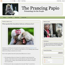 The Prancing Papio: What spooked the hamadryas baboons at Emmen Zoo?