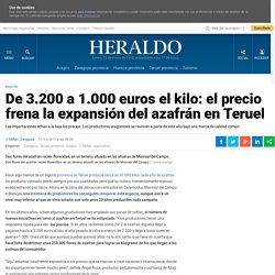 De 3.200 a 1.000 euros el kilo: el precio frena la expansión del azafrán en Teruel