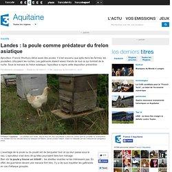 FRANCE 3 AQUITAINE 10/10/13 Landes : la poule comme prédateur du frelon asiatique