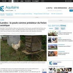 Landes : la poule comme prédateur du frelon asiatique - France 3 Aquitaine