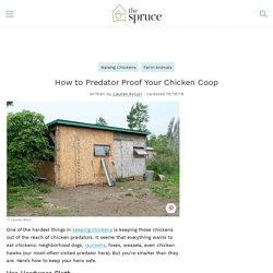 How to Predator Proof Your Chicken Coop