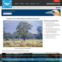 Predator-prey relationships in the African savannah