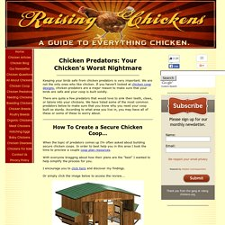 Chicken Predators, A Complete List Of Animals That Want Your Chickens For Dinner