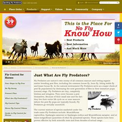 Just What Are Fly Predators? - Fly Control For Horses - Spalding Labs