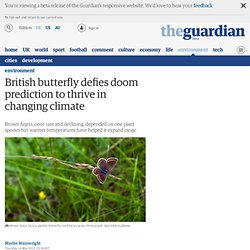 British butterfly defies doom prediction to thrive in changing climate | Environment