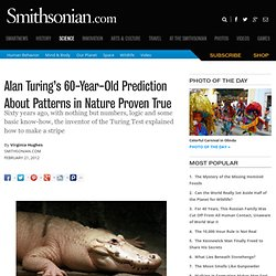 Alan Turing's 60-Year-Old Prediction About Patterns in Nature Proven True | Surprising Science