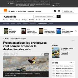 Frelon asiatique: les préfectures vont pouvoir ordonner la destruction des nids sur Orange Actualités