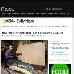 "New Prehistoric Crocodile Found in ""Kitchen Counters"""
