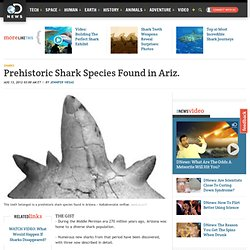 Prehistoric Shark Species Found in Arizona
