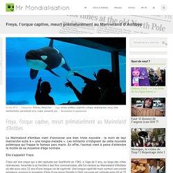 Freya, l'orque captive, meurt prématurément au Marineland d'Antibes
