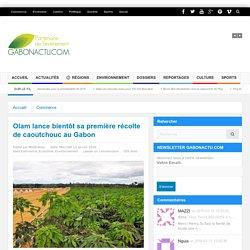 Olam lance bientôt sa première récolte de caoutchouc au Gabon - GABONACTU.COM