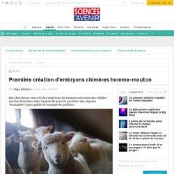Première création d'embryons chimères homme-mouton