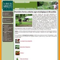 Première ferme urbaine agro-écologique à Bruxelles | Le début des haricots