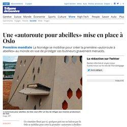 Première mondiale: Une «autoroute pour abeilles» mise en place à Oslo - News Vivre: Société