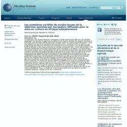 MERID 07/09/12 Les premières variétés de sorgho issues de la sélection assistée par marqueurs diffusées pour la mise en culture
