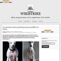 Les premiers chiens génétiquement modifiés en Chine