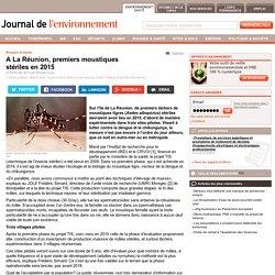 A La Réunion, premiers moustiques stériles en 2015