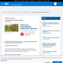 FRANCE BLEU 25/01/20 L'esca, une préoccupation majeure des vignerons