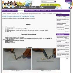 Préparation microscopique de cellules de cristallin — SVT Lille