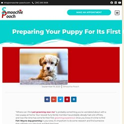 Preparing Your Puppy For Its First Grooming