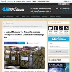 Is Medical Marijuana The Answer To Americas Prescription Pain Killer Epidemic? New Study Says Yes