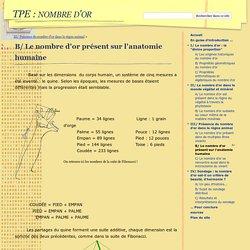 B/ Le nombre d'or présent sur l'anatomie humaine - TPE : nombre d'or