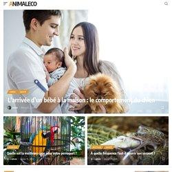Présentation du low tech, un aquarium à moindre coût. - Animal & Co - Blog