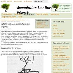 La taille trigemme, présentation des organes - Association Les Mordus de la Pomme